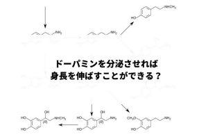 ドーパミン分泌で身長を伸ばす